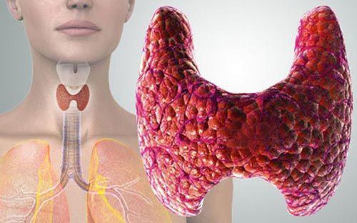 Щитовидна залоза і менструація
