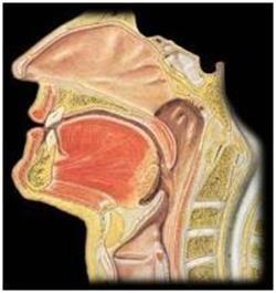параліч гортані
