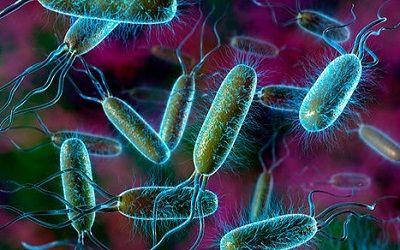Симптоми дисбактеріозу кишечника і лікування