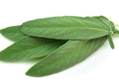 Листя шавлії для лікування фарингіту