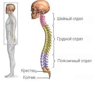 Симптоми і ознаки остеохондрозу грудного відділу хребта