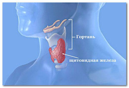 гормони щитовидної залози