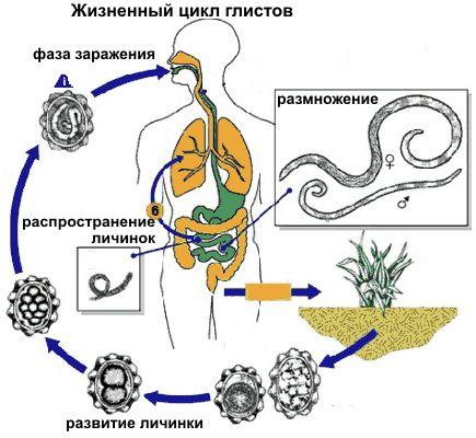 Способи виявлення паразитів в організмі людини