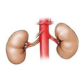 Стеноз ниркової артерії (па): причини, ознаки, діагностика, як лікувати, операція