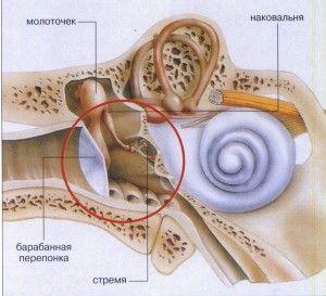 Середнє вухо