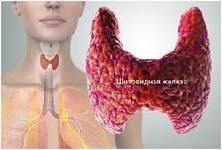 Т4 гормон вільний: загальні характеристики, розшифровка аналізів, відхилення від норми