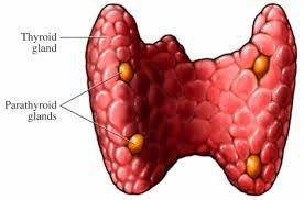 Тонкоголкової біопсія щитовидної залози