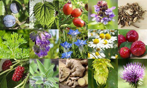 Трави, корисні для чоловічого здоров`я