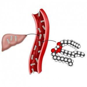 Тригліцериди в крові: норма по віковим групам, причини підвищення, як знизити