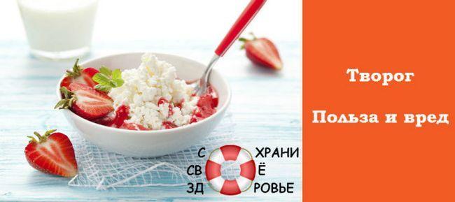 Сир - користь і шкода кисломолочного продукту