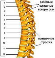 Вправи для грудного відділу хребта.