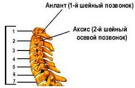 Вправи для шийного відділу хребта.