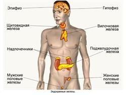 Важливість залоз внутрішньої секреції для людини