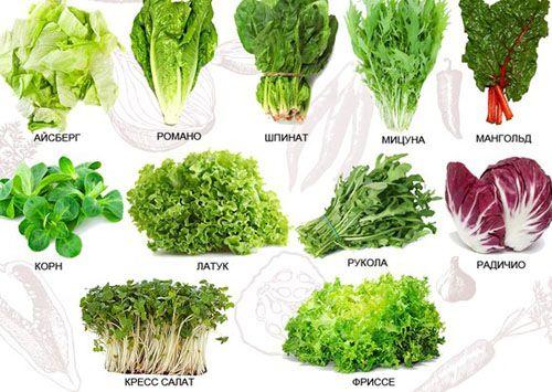 Види листових салатів