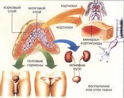 захворювання надниркових залоз