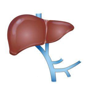 Воротна вена: функції, будова системи портального кровообігу, захворювання і діагностика