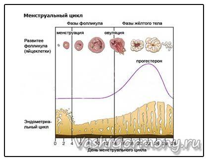 Графік норми рівня прогестерону в залежності від дня циклу у жінок