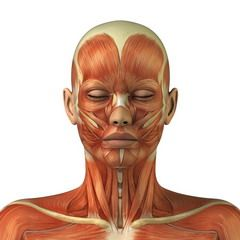 м`язи обличчя