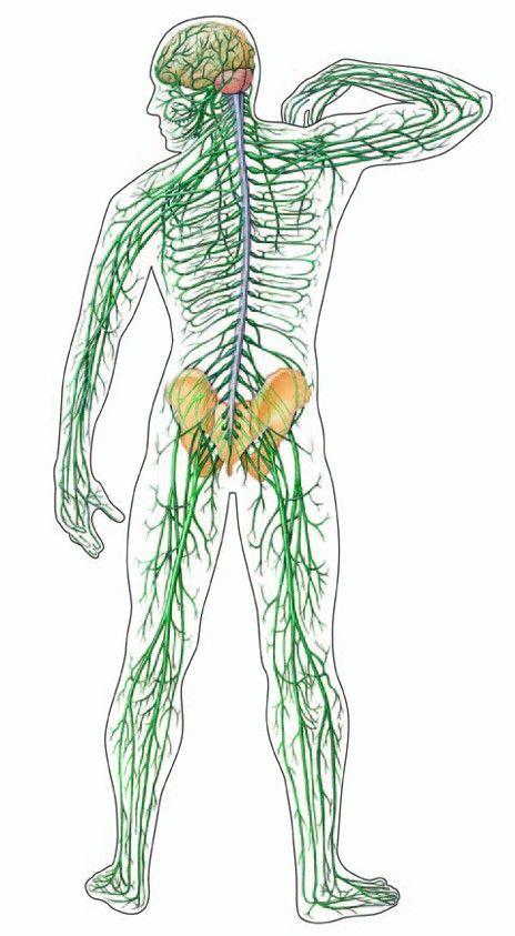Захворювання нервової системи людини в східній медицині