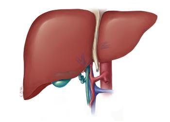Захворювання печінки в тибетській медицині